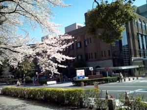 Tokyounivsakura01